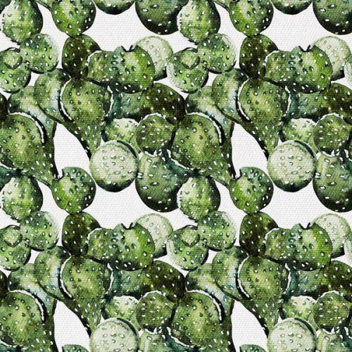 Kolczasty Kaktus